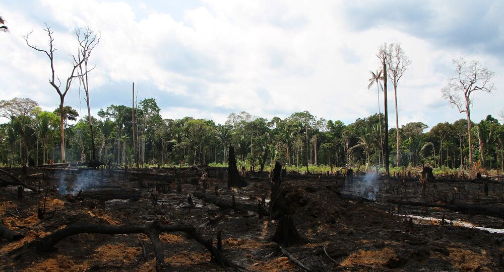 Queimada é vista em área de plantação próximo à praia de Lábrea (AM), no início da tarde desta sexta-feira,  de setembro de 2019