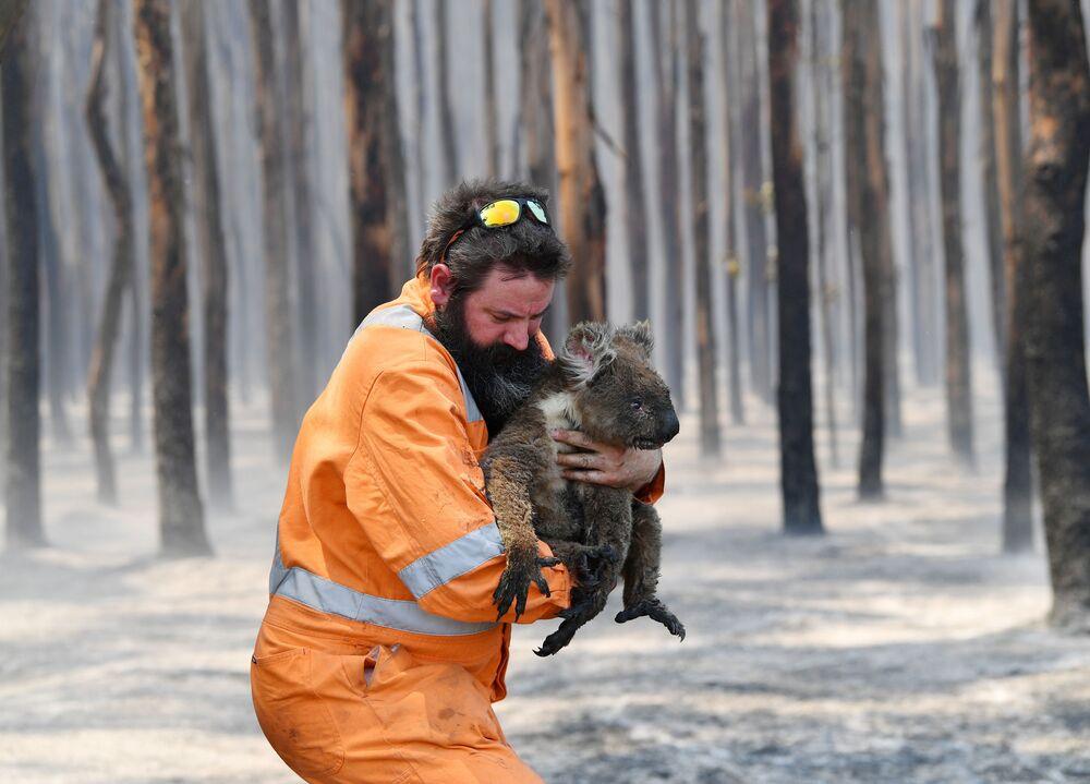 Bombeiro australiano salva coala