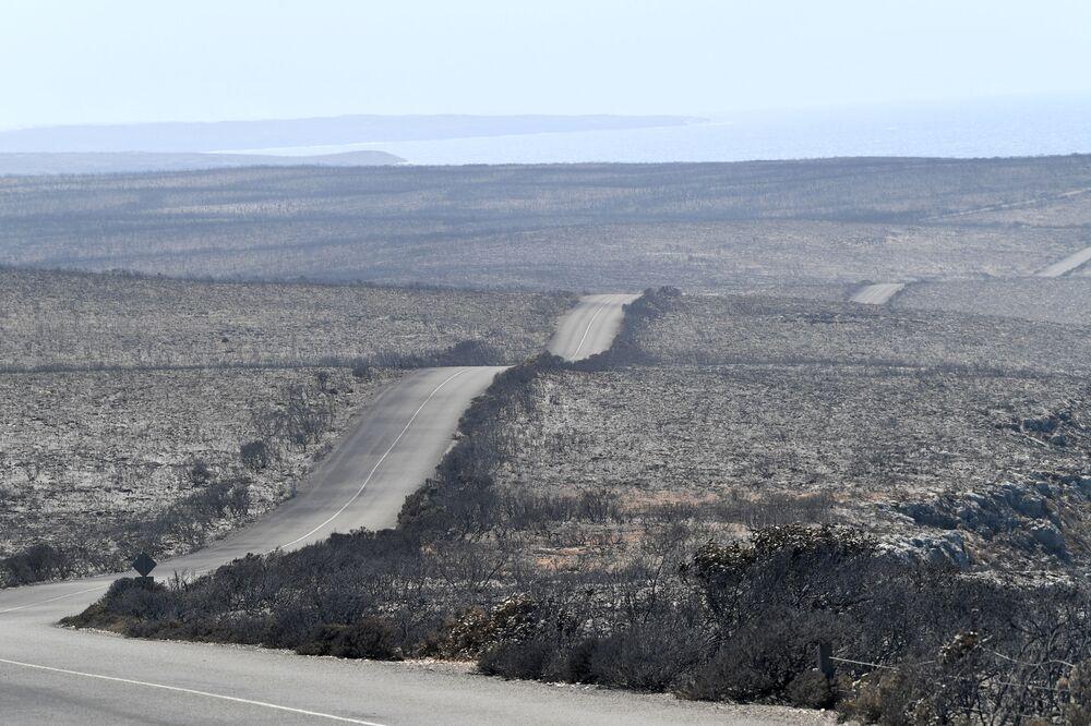 Vista desoladora dos efeitos do incêndio no Parque Nacional de Flinders Chase, na ilha australiana de Canguru