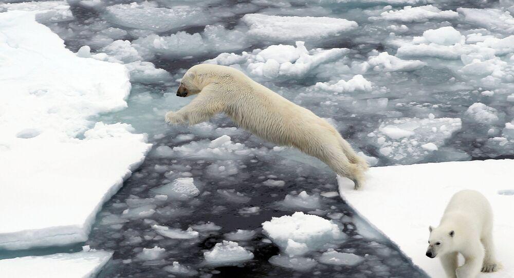 Urso polar branco salta entre formações de gelo no Oceano Ártico
