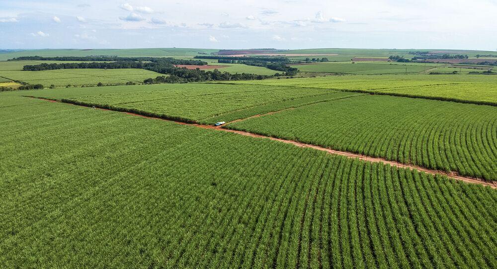 Vista aérea de drone de uma plantação de cana-de-açúcar no município de Pederneiras, região centro-oeste do estado de São Paulo
