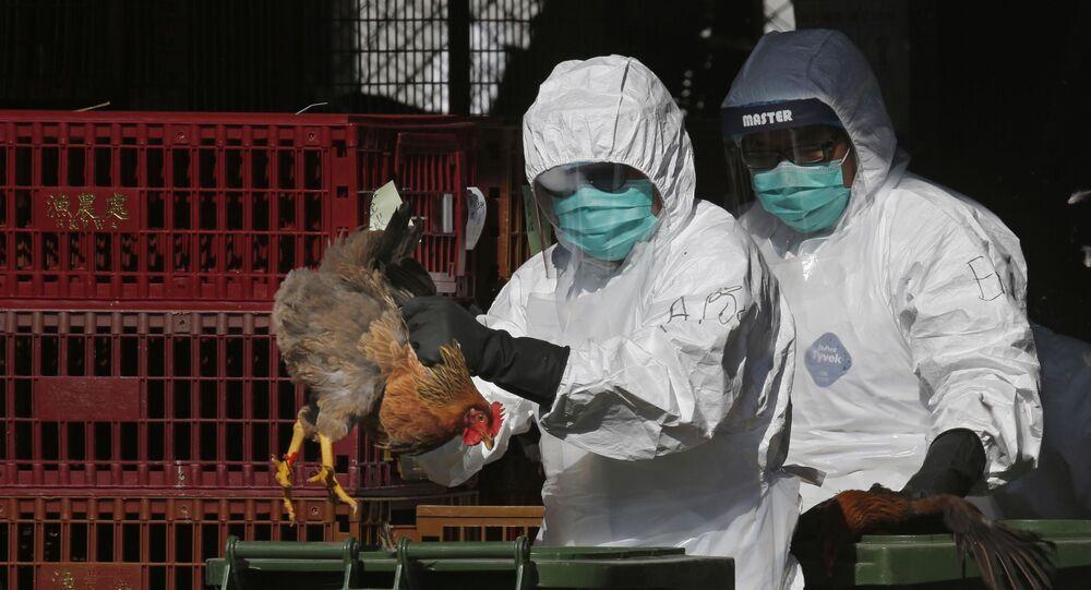 Profissionais de saúde com equipamento de proteção colocam uma galinha viva em uma lata de lixo, enquanto começam a abater galinhas usando dióxido de carbono em um mercado atacadista de aves em Hong Kong. Foto de 31 de dezembro de 2014.