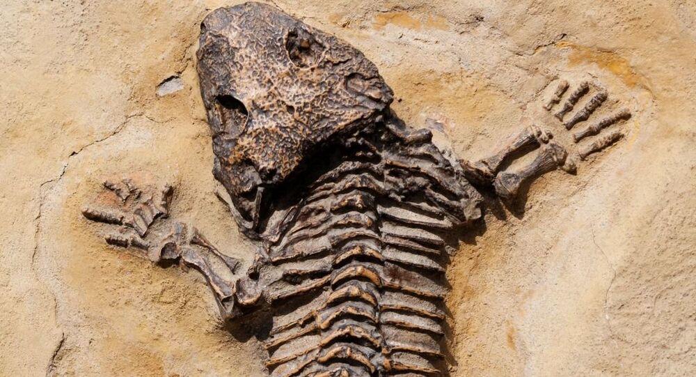 Fóssil de réptil jurássico (imagem referencial)