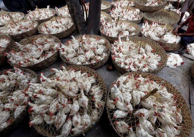 Fornecedor separa frangos por tamanho em mercado de galinhas em Calcutá, na Índia (foto de arquivo)