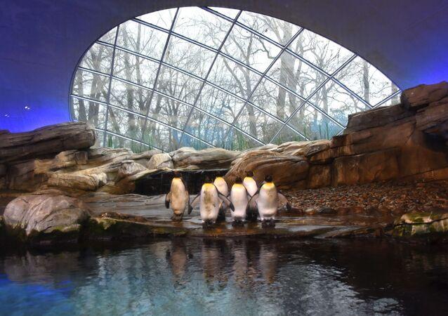 Pinguins no recinto do Jardim Zoológico de Berlim, Alemanha