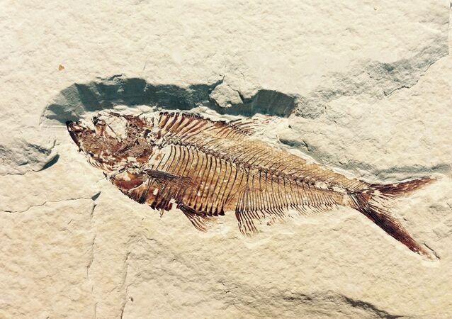 Fóssil petrificado de peixe (imagem referencial)