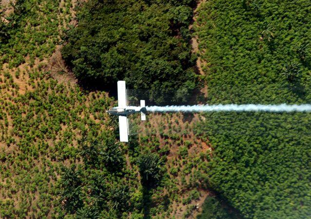 Plantação de folhas de coca em El Catatumbo, no norte do departamento de Santander, na Colômbia