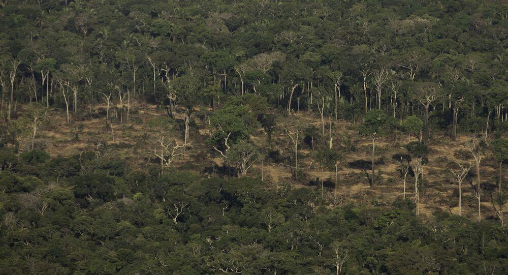 Terreno desmatado e queimado é visto na Amazônica, nos arredores de Porto Velho, em Rondônia, em 2019