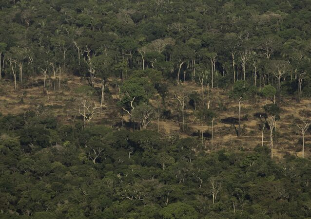 Terreno desmatado e queimado é visto na floresta Amazônia nos arredores de Porto Velho, em Rondônia, em 2019