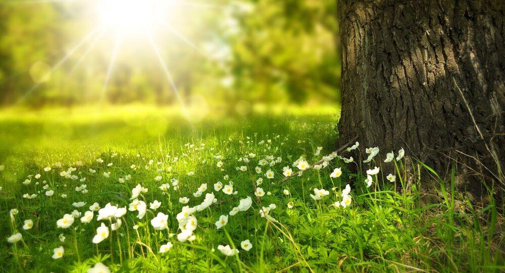 Flores no bosque (imagem ilustrativa)