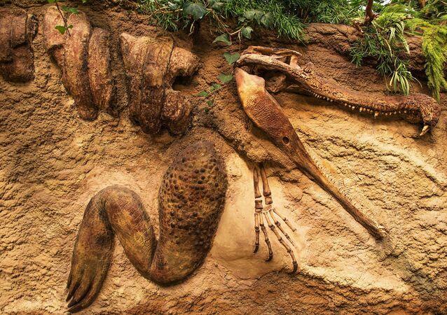 Fóssil de crocodilo (imagem referencial)