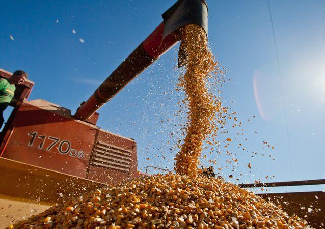 Colheita de grãos