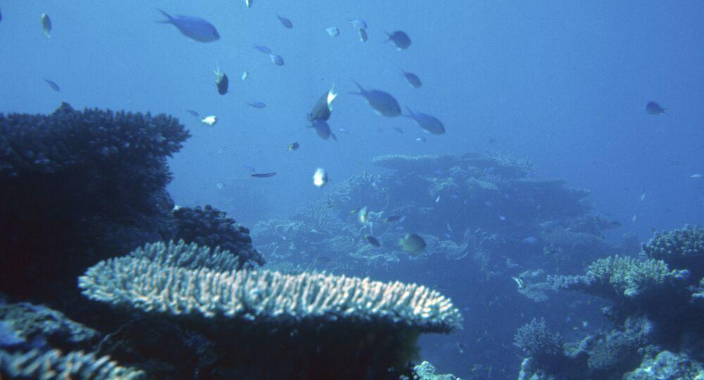 Oceano Pacífico (foto de arquivo)