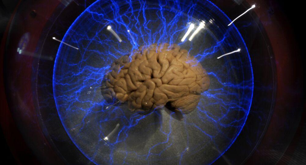 Cérebro humano dentro da caixa de vidro na exposição em São Paulo, agosto 2009.