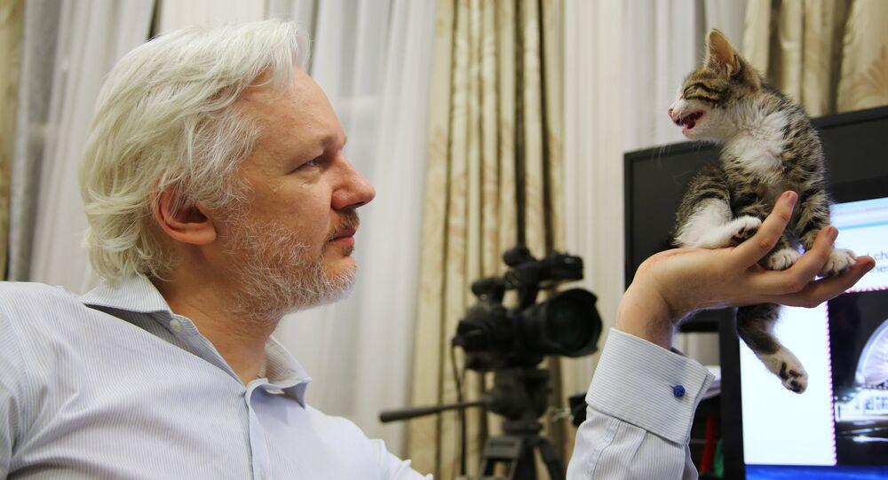 Julien Assange mostra seu gato na Embaixada do Equador em Londres