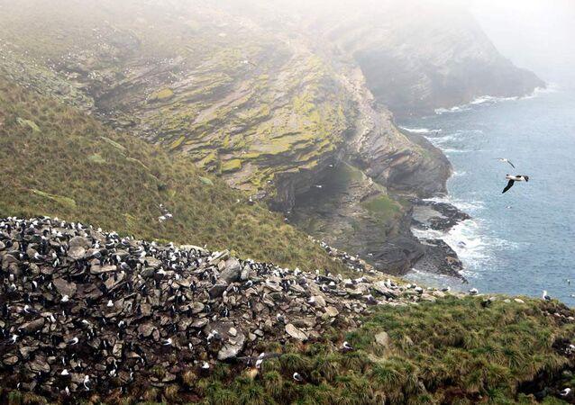Vista das Ilhas Malvinas