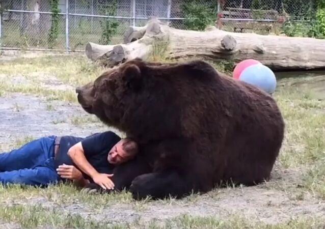 Quem tem amigo urso não pode cochilar!