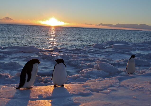 Pinguins-de-adélia no Antártico. Estação McMurdo. 25 de fevereiro, 2011 (imagem referencial)