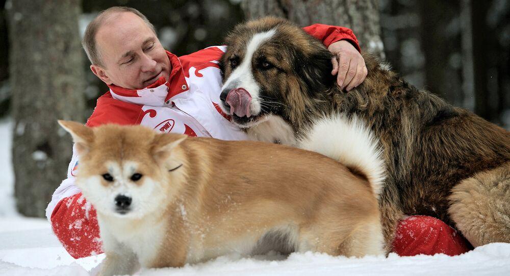 Presidente russo com seus cachorros, Buffy e Yume, durante um passeio na região de Moscou
