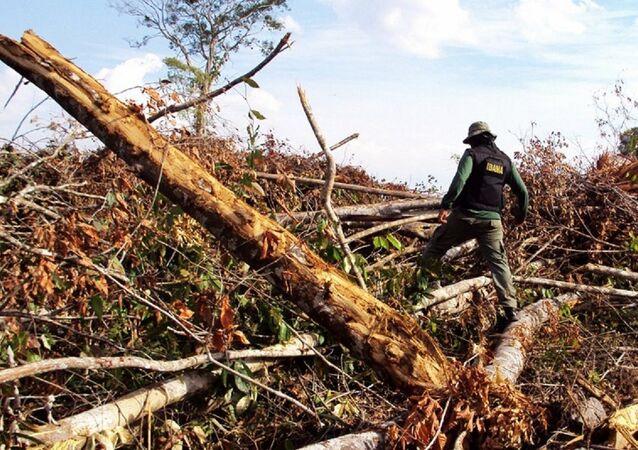 Fiscalização do Ibama na Amazônia