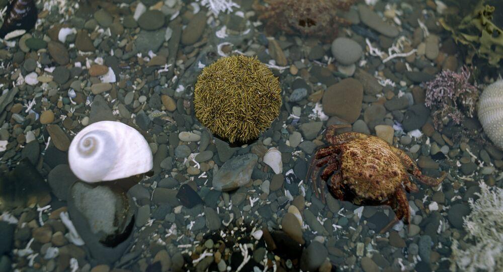 Animais marinhos na faixa costeira da Ilha de Bering