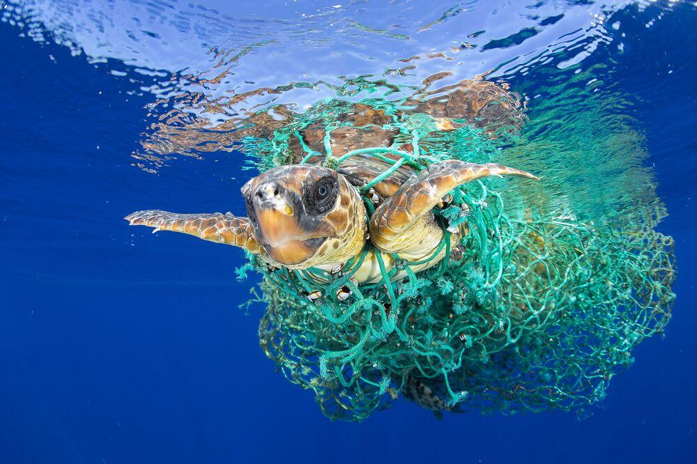 Imagem de Francis Pérez mostra uma tartaruga marinha enredada em redes de pesca perto da ilha de Tenerife, no arquipélago espanhol das Canárias