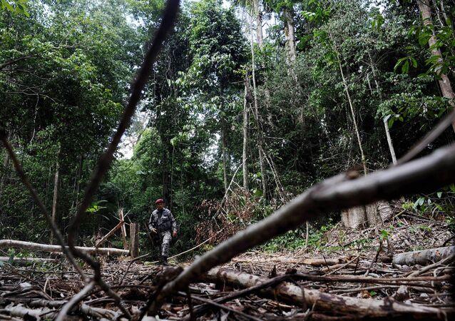 Desmatamento volta a crescer na Amazônia