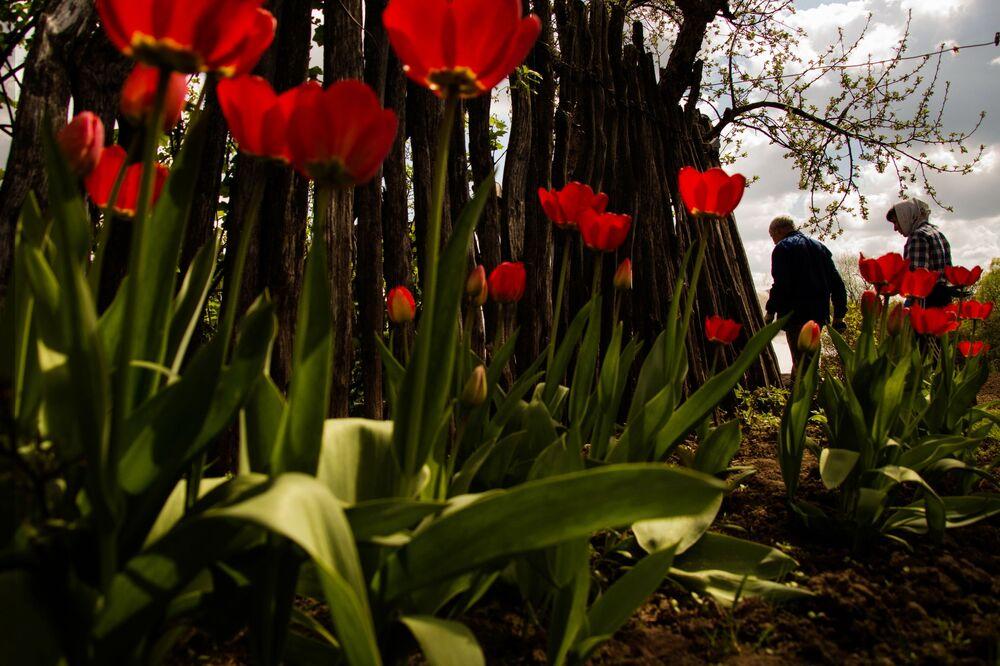 """A foto de Svetlana Tarasova (Rússia) da série """"Jardim"""" que ficou em segundo lugar na categoria """"O Meu Planeta"""""""