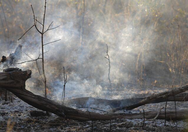 Umidade do ar em 11% facilita propagação de focos de incêndio